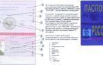 Проверка действительности паспорта гражданина рф в 2020 году — на сайте, визуальный осмотр, заявление
